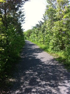 Lovely trail from Batawa to Glen Ross