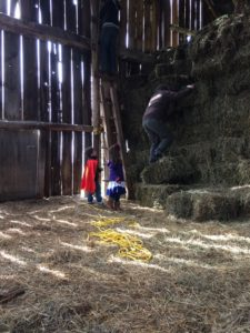 Climbing up the hay bales